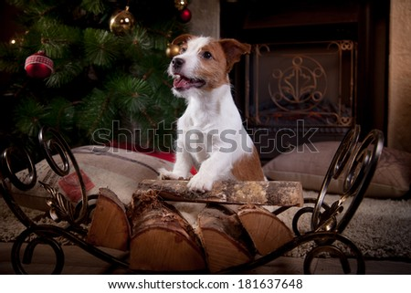 Jack Russell puppy, fireplace - stock photo