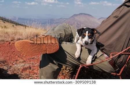 Jack Russell puppy is sitting on the lap of the owner on a background of mountains in South Africa - stock photo