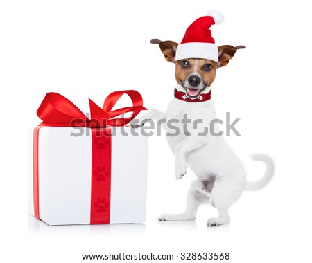 jack russell santa claus dog with a big gift or present,  for christmas , isolated on white background - stock photo