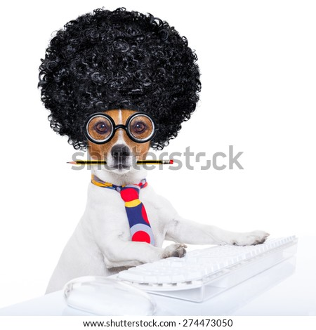 jack russell secretary dog booking a reservation online using a pc computer laptop keyboard ,with crazy silly afro wig , pencil in mouth, isolated on white background - stock photo