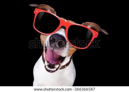 jack russell terrier dog isolated on black background