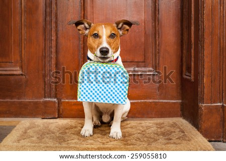 jack russell terrier dog left alone outside home  with luggage , ready to go on his own - stock photo