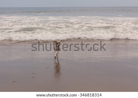 Jack Russell Terrier Dog Runs And Plays At Pacific Ocean - stock photo