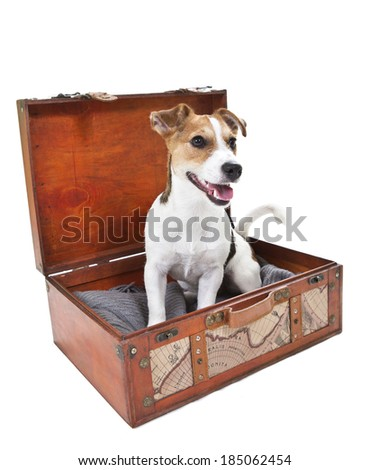 Jack russell terrier in a suitcase. Image taken in a studio.
