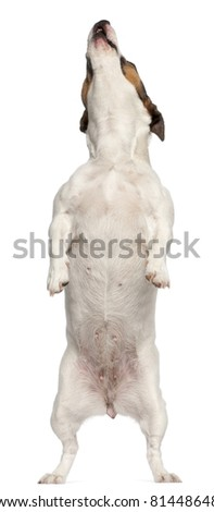 Dog Standing Up Stock Images, Royalty-Free Images ...