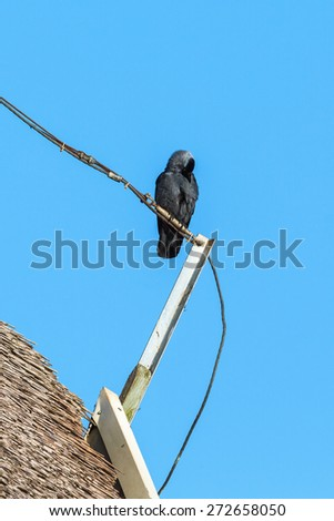 Jackdaw sitting on a pole on a reed thatched roof - stock photo