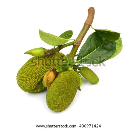 Jackfruit isolated on white background