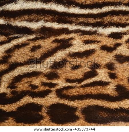 jaguar fur - stock photo
