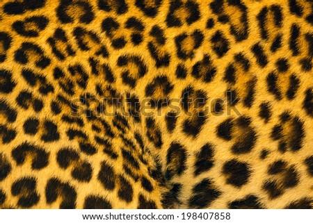 Jaguar, leopard and ocelot skin texture. - stock photo