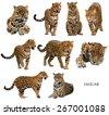 jaguar   panthera onca  ...