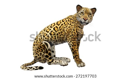 Jaguar sitting, animal isolated on white background