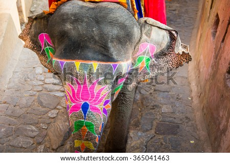 JAIPUR, INDIA - JAN 19, 2016: Unidentified Indian man rides an elephant. Indian elephants used to be one of the main way of transportation in the past