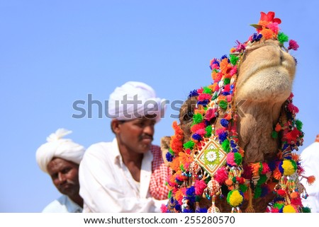JAISALMER, INDIA - FEBRUARY 17: Decorated camel head with cameleers (blurred) in background on February 17, 2011 in Jaisalmer, India. Main purpose of this Festival is to display culture of Rajasthan - stock photo