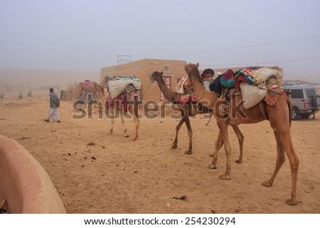JAISALMER, INDIA-FEBRUARY 19: Unidentified man leads camels through desert village on February 19,2011 near Jaisalmer, India. Camel safari in That desert are very popular among tourists from Jaisalmer - stock photo