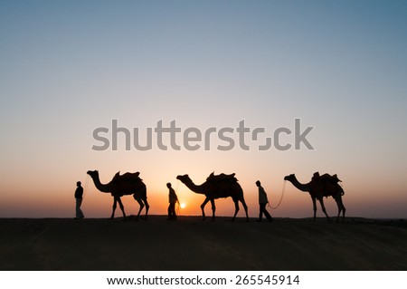JAISALMER, INDIA - NOVEMBER 15,2008: Silhouette of unidentified local people and camels at sunset on November 15,2008 in Thar desert near Jaisalmer, Rajasthan, India. - stock photo