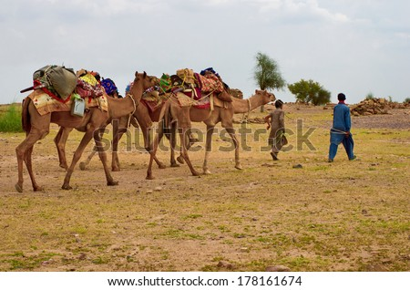 JAISALMER, INDIA - SEPT 23: Cameleer  in desert on Sept 23, 2013 in Jaisalmer, India. Camel riding activity is important income source for desert villagers.  - stock photo