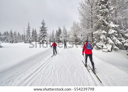 JAKUSZYCE, POLAND - JANUARY 06, 2017: Cross-country skiers running on prepared tracks in snow on a cloudy day.