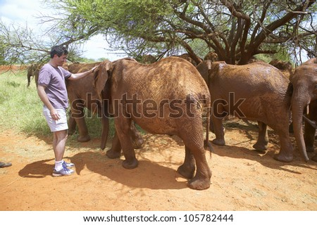 JANUARY 2005 - Humane society Chief Executive Officer, Wayne Pacelle, petting adopted Baby African Elephants at the David Sheldrick Wildlife Trust in Tsavo national Park, Kenya - stock photo