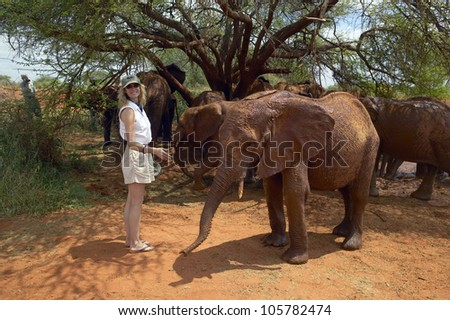 JANUARY 2005 - Woman smiling with Adopted Baby African Elephants at the David Sheldrick Wildlife Trust in Tsavo national Park, Kenya - stock photo