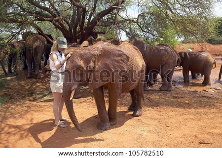 JANUARY 2005 - Woman with Adopted Baby African Elephants at the David Sheldrick Wildlife Trust in Tsavo national Park, Kenya - stock photo
