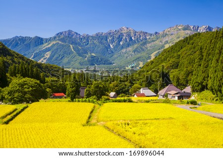 Japan Alps and rice field, Hakuba village, Nagano, Japan - stock photo