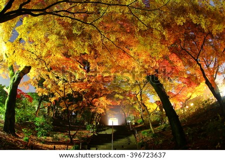japan Superb view?Autumn leaves and temple
