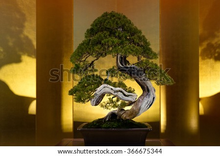 Japanese art form using trees, Bonsai, on the gold background - stock photo