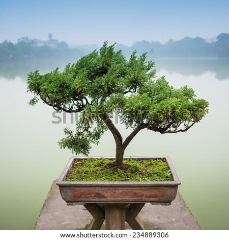 Japanese bonsai tree pot zen garden stock photo royalty for Zen garden trees