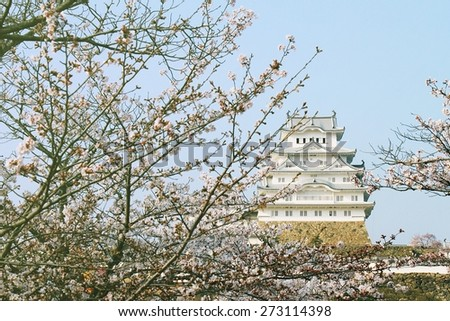 Japanese castle and Beautiful pink cherry blossom (sakura), Himeji castle. UNESCO world heritage. (Soft Light And Color Process) - stock photo