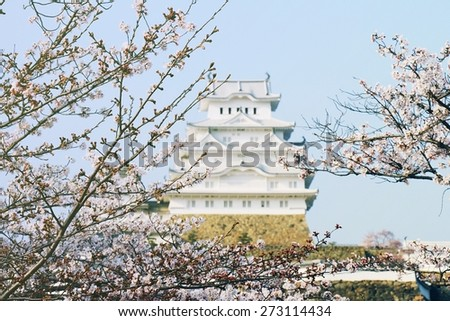 Japanese castle and Beautiful pink cherry blossom (sakura), Himeji castle. UNESCO world heritage. Focus in Sakura and Blur Castle in Background   (Soft Light And Color Process) - stock photo
