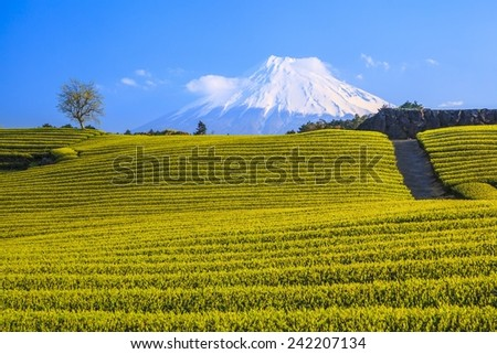 Japanese green tea plantation and Mt. Fuji, Shizuoka, Japan - stock photo