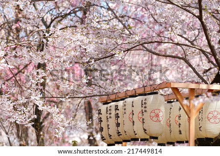 Japanese lantern in the park filled with Sakura - stock photo