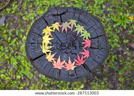 Japanese maple leaves arranged in a circular gradation of colour on a wooden log.