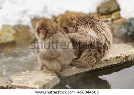 Japanese monkeys on hot water during winter in mountain