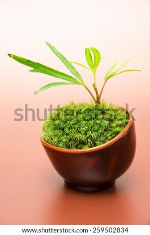 Japanese Moss Bonsai  - stock photo