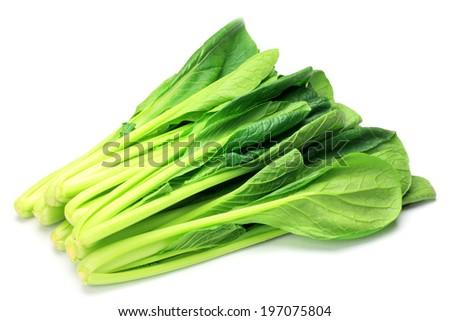 Japanese mustard spinach - stock photo