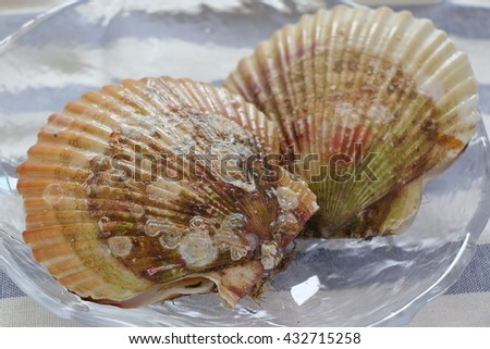 Japanese scallop