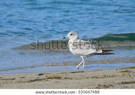 Japanese sea, seagull on the shore