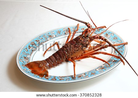 Japanese spiny lobster - stock photo