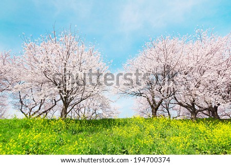 Japanese spring scenics - stock photo