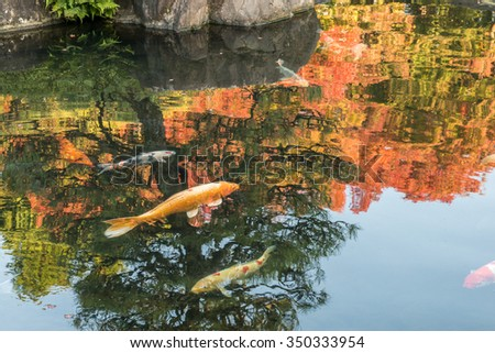 Japanese style pond with Koi in Koko-en Garden with reflection of Japanese garden in Autumn Red Maple Leaf Foliage located next to Himeji Castle in Hyogo Prefecture, Japan. - stock photo