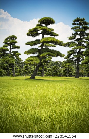 Japanese trees and sky - stock photo