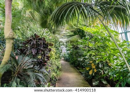 Jardin des Serres d'Auteuil - botanical garden set within a major greenhouse complex. Bois de Boulogne, Paris, France. Served as a botanical garden in 1761 under Louis XV. Greenhouse. - stock photo