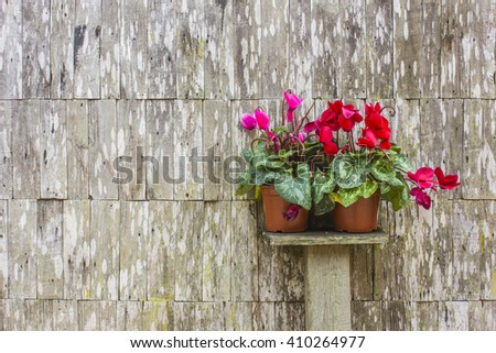 jardiniere on wooden wall , home decoration