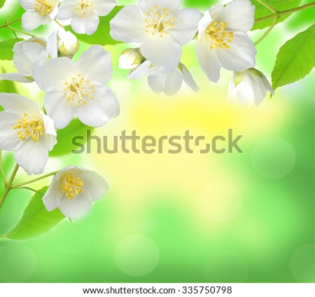 Jasmine flower with leaves over beautiful nature background - stock photo