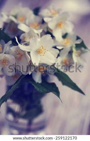 Jasmine flowers on nature spring background. selective focus on the middle jasmine flower. - stock photo