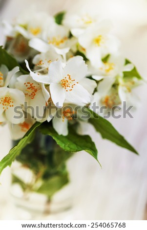 Jasmine flowers on  wooden background. toning. selective focus on the middle jasmine flower. - stock photo