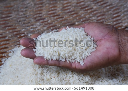 Jasmine rice in the hands of farmers with health benefits and is the staple food of Thailand.