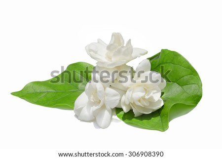 jasmine white flower isolated on white background. this has clipping path.