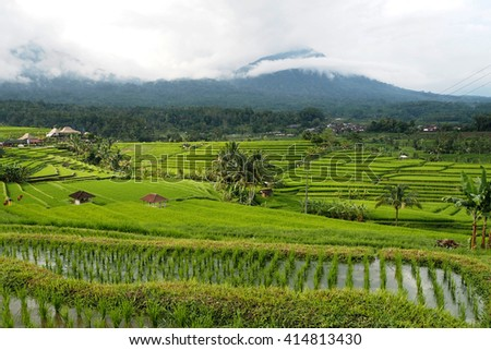 jatiluwih rice terraces very beatyful